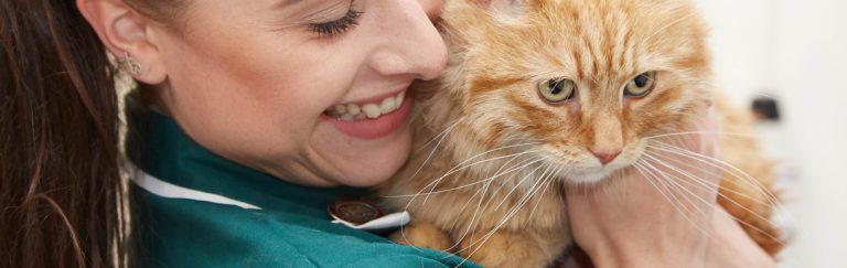 Cat Friendly Clinic | Petherton Veterinary Clinics